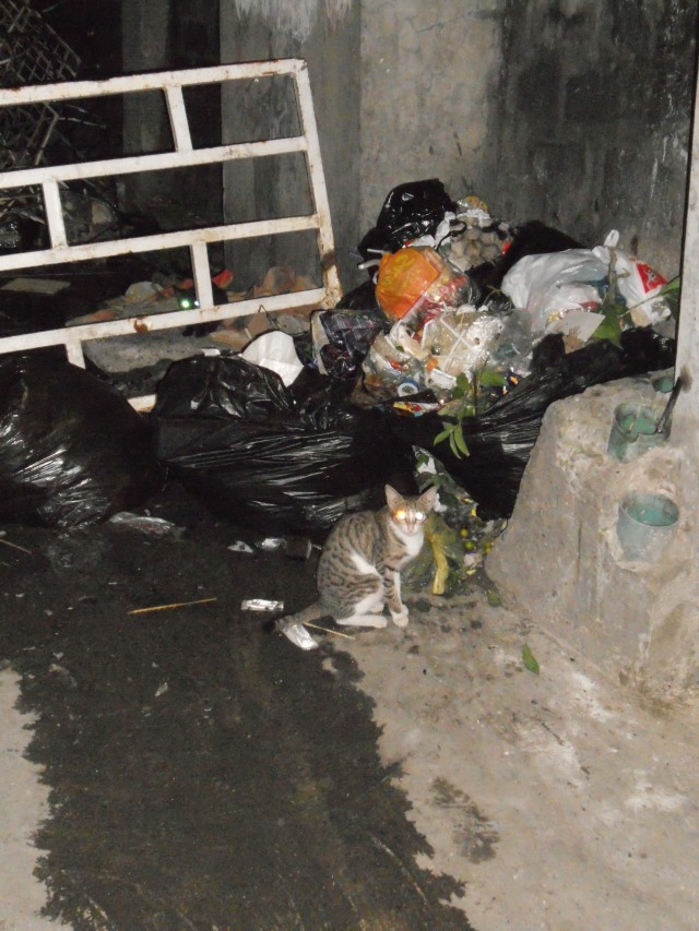 Current garbage disposal site in Barangay I